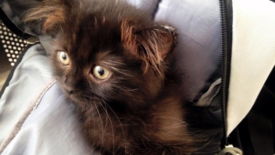 6-essential-things-to-consider-before-adopting-a-cat