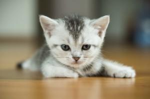 photo credits: http://www.salon.com/topic/cats/